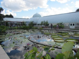 Lily pond in Conservatory courtyard.
