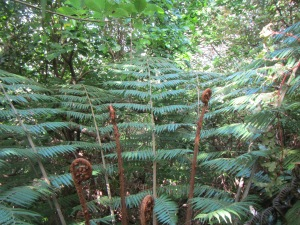 Ponga tree fern; the symbol of New Zealand