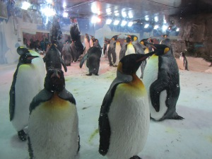 Royal looking emperor penguins at Kelly Tarlton's