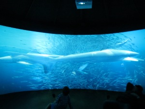 Amazing artifically intelligent exhibit