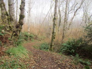 A variety of woodlands framed the trail.