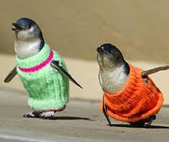 Warning: penguin sweaters or jumpers are not needed at this time!