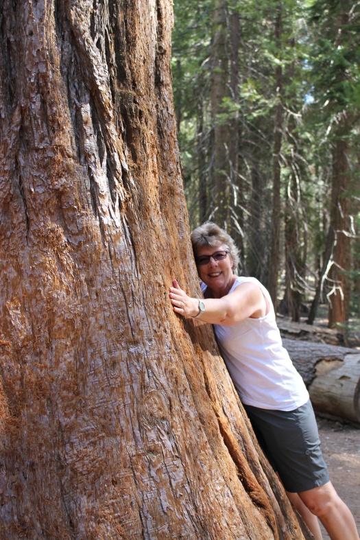 UK Sarah hugging a Sequoia