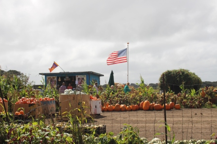 Farmer John's pumpkin patch has a teepee, a tractor and an annual gathering of Burmese Mountain dogs.