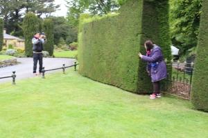 Larnach Catstle Garden, Dunedin, New Zealand