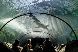 See sharks at the Sydney Aquarium