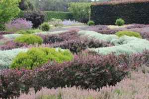 One of two full size knot gardens at Filoli.