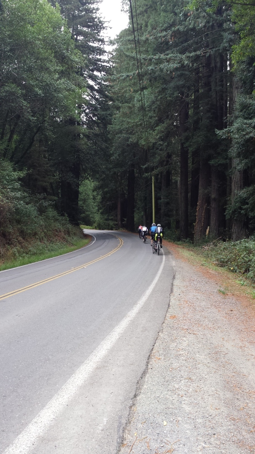 Beautiful redwoods lined the route on Nicasio Valley Road.